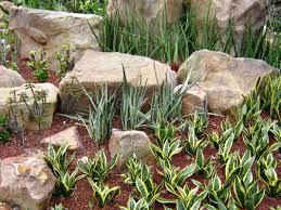 Small Picture Cactus Garden Ideas Garden ideas and garden design