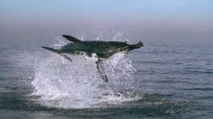 great white shark jumping out of water planet earth. Throughout Great White Shark Jumping Out Of Water Planet Earth