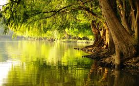 Image result for trees by a river picture