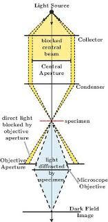 dark field microscopy file dark field microscopy 2d pdf wikimedia commons