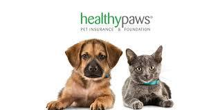 Best Pet Insurance Reviews 2020 Update 365 Pet Insurance