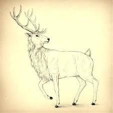 Draw Animal Storamossen Info