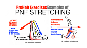 Pnf Patterns Amazing The Art Of Stretching PreHab Exercises