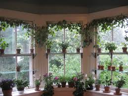 Garden Windows For Kitchen Chive Pesto Recipe Gardens Sun And Window