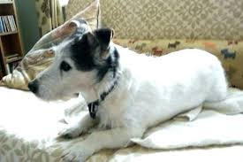 pet proof area rugs dog on rug how to remove the odor of urine from pet proof area rugs