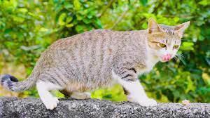 Rửa Mặt Như Mèo 💙 Con Mèo Mà Trèo Cây Cau 💚 Nhạc Thiếu Nhi Mèo Con Tinh  Nghịch - YouTube