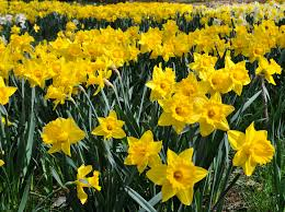 growing different types of flowers annuals perennials from bulbs2 bulb flower types s77