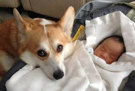 dogs and cats having babies. Unique Cats These Cats And Dogs Protecting Babies Is The Sweetest Thing You Have Ever  Seen 5k For Having R