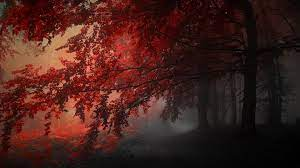 Download Crimson Forest Live Wallpaper ...