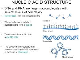 Nucleic Acid Structure Ppt Video Online Download