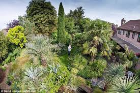 Small Picture Tropical Garden Design Ideas Uk izvipicom