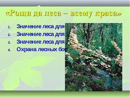 Презентация по окружающему миру на тему Человек и природные   Рощи да леса всему краса Значение леса для природы Значение леса для жизн