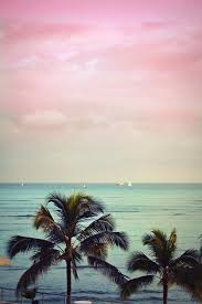 palm trees tumblr vertical. Rainbow Colours. Colours \u2013 Tumblr Palm Trees Vertical