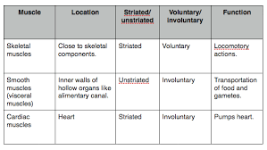 Locomotion And Movement Ncert Cbse Resources