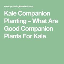 Kale Companion Planting Chart Kale Companion Plants Learn About Plants That Grow Well
