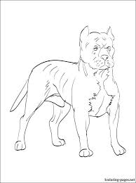 Pitbull Coloring Pages Pitbull Black And White Clip Art A Black And