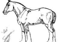 Picture 10 Of 11 211 Best Coloring Horse Images On Pinterest