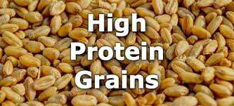 Top 10 Grains Highest In Protein