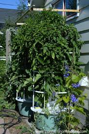 7 reasons to grow a tower garden