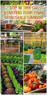 vegetable gardens are the easiest and est way to healthy safe veggies you have probably thought about starting your own