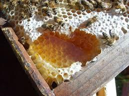 Αποτέλεσμα εικόνας για μελι ληθαιον μελι