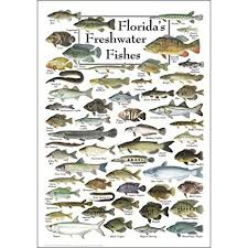Amazon Poster com amp; Posters Prints - Water Freshwater Earth Sky Fishes Florida's