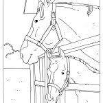 20 Beste Kleurplaten Paarden Manege Win Charles