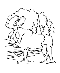 moose animal coloring pages
