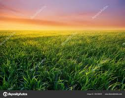 grass field sunrise. Interesting Field Grass Field Sunrise Agricultural Landscape Summer Time U2014 Stock Photo For G