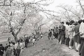 おいらん道中紹介 新潟県燕市の観光スポット情報なら燕市観光協会