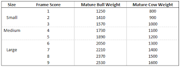 How To Calculate Target Slaughter Weights For Your Beef