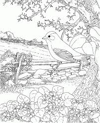 Easter Goldfinch New Jersey State Bird Coloring Page Visit