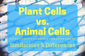 Organelles In Plant And Animal Cells Venn Diagram Plant Cells Vs Animal Cells With Diagrams Owlcation