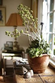 Decorating: Succulent Plants Pot Design - 20 Awesome Succulents Garden Ideas