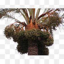 The Palm Oil Conundrum Demystified U2013 The Jedwards BlogPalm Tree Orange Fruit