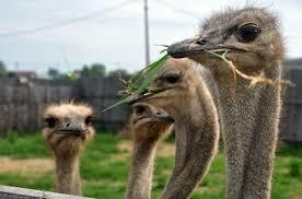 Приокско-террасный заповедник и <b>страусиная ферма</b>