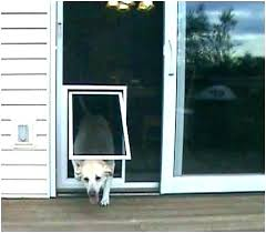 in glass pet door glass dog door door with pet door pet door sliding glass sliding