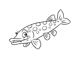 Small Picture Pike Fish Illustration Coloring Pages Royalty Free Stock Image