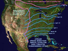 Hummingbird Migration Patterns