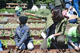 Robins Kitchen Garden City Multimedia Scripps Howard Foundation Wire News Politics