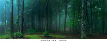 Forest Images Stock Photos Vectors Shutterstock