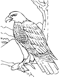 Small Picture Bald Eagle Coloring Page for Kids Free Printable Picture