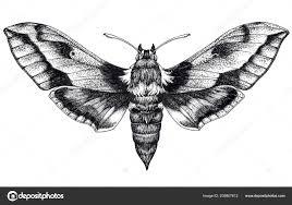 рука нарисованные бабочка татуировки Dotwork татуировки хок Moth