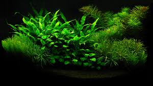 12533 Awesome Hd Fish Tank Wallpapers