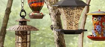Common Birdfeeder Problems