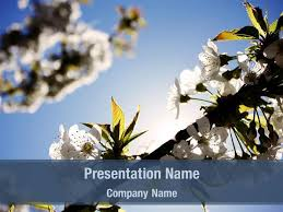 Spring Powerpoint Free Spring Tree Powerpoint Template Backgrounds Spring