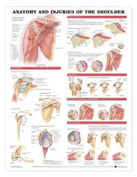 Anatomy Book Anatomy And Pathology