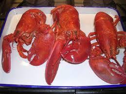 Reenie's Recipes - Fresh Steamed Lobster