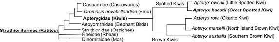 Bird Taxonomy Chart Classification