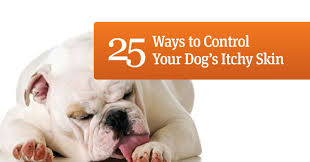 25 ways to control your dog's itchy skin | Ruff Ideas